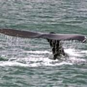 Humpback Whale Flute Alaska Art Print