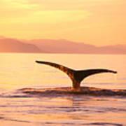 Humpback Whale Fluke Art Print