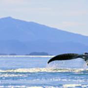 Humpback Whale Flukes Art Print