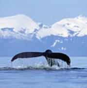 Humpback Whale Megaptera Novaeangliae Print by Konrad Wothe