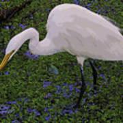 Hungry Great Egret Art Print