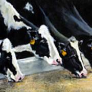Hungry Holsteins Art Print