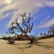 Hunting Island Beach And Driftwood Art Print