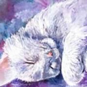 Hushabye Kitten Art Print