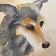 Husky Mix Art Print
