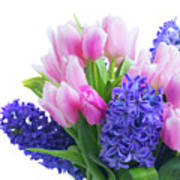 Hyacinths And Tulips  Art Print