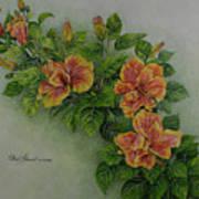 Hybrid Hibiscus Art Print
