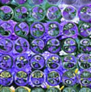 Hydrangea Bubbles Art Print