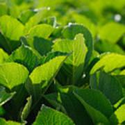 Hydrangea Foliage Art Print by Gaspar Avila