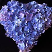 Hydrangea Heart Art Print