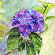 Hydrangea On Clayboard Art Print