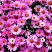 I Believe In Pink Daisies Art Print