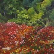 I Dream Of Poppies Art Print