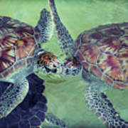 I Kissed A Turtle And I Liked It Art Print