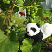I Love Grapes Says The Panda Art Print