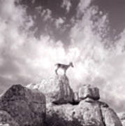 Ibex -the Wild Mountain Goats In The El Torcal Mountains Spain Art Print