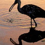 Ibis At Dusk Art Print