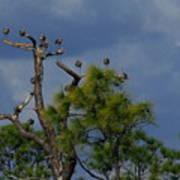 Ibis In The Pines - Debbie May Art Print