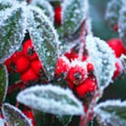Ice Berries Art Print
