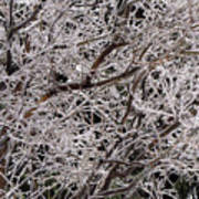 Iced Branches Art Print