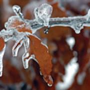 Iced Leaves Art Print