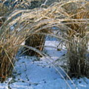 Iced Ornamental Grass Art Print