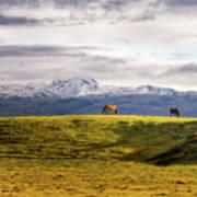 Icelandic Horses On The Countryside  Art Print