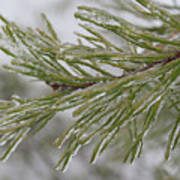 Icy Fingers Of The Pine Art Print
