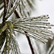 Icy Pines Art Print