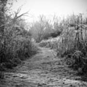 Icy Trail In Black And White Art Print