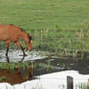 Idaho Farm Horse 2 Art Print