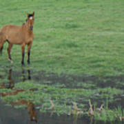 Idaho Farm Horse1 Art Print