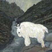 Idaho Mountain Goat Art Print