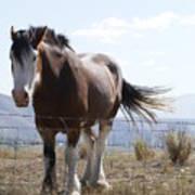 Idaho Work Horse 2 Art Print