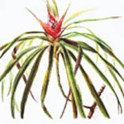 Ieie Plant Art Art Print