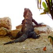 Iguana Watchout Art Print
