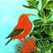 IIwi Scarlet Honeycreeper Bird #54 Art Print