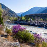 Ilgumensky Rapids At Spring Time. Altay Mountains Art Print