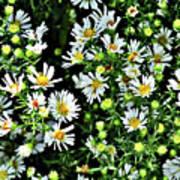 Illinois Wildflowers 1 Art Print