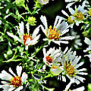 Illinois Wildflowers 3 Art Print