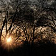 Illuminating Through Trees  Art Print
