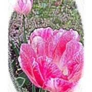 Illustrated Rose Vignette Art Print