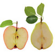 Illustration Of Apple And Pear Art Print