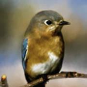 I'm A Bluebird Art Print