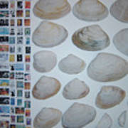 Images And Shells Art Print