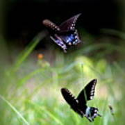 Img_1521 - Butterfly Art Print