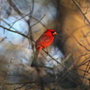 Img_2866-001 -  Northern Cardinal Art Print