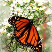 Img_5284-001 - Butterfly Art Print