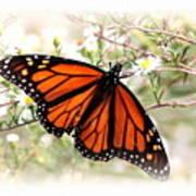 Img_5290-004 - Butterfly Art Print