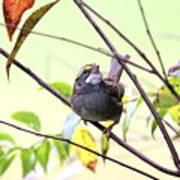 Img_7541-002 - White-throated Sparrow Art Print